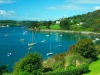 Glandore harbour, West Cork - Tree
