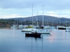 Schull Harbour at Dawn, West Cork